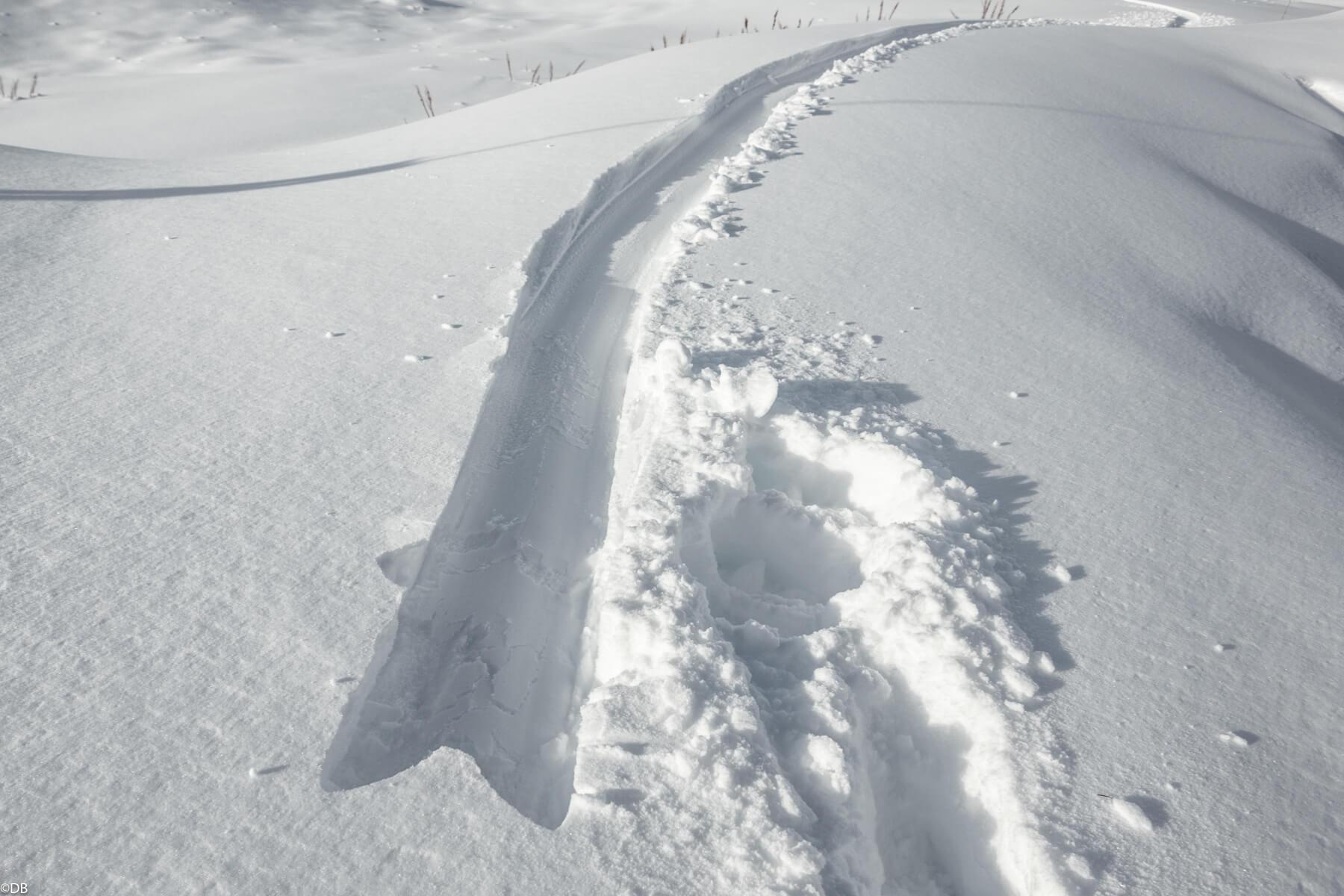 Powsurf trace dans la neige